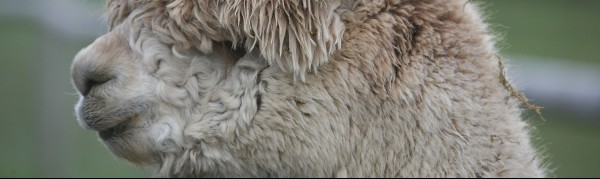 Simply Alpaca 3 glos.info