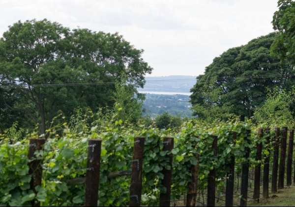 Woodchester Valley Vineyard - Award Winning Wines from the Cotswolds