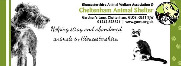 glos info cheltenham animal shelter 1
