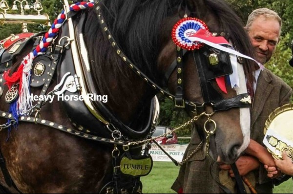 heavy-horse-show-frampton.jpg
