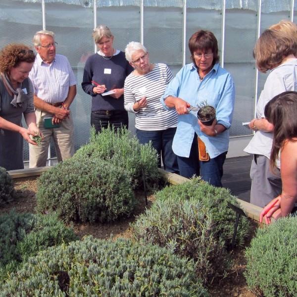 how-to-grow-herbs.jpg