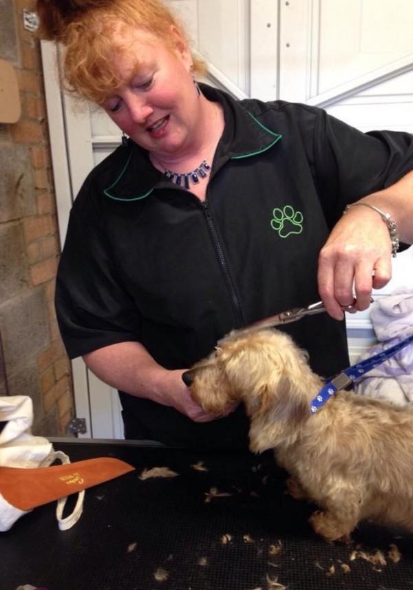 k9 holidays and grooming dog 6