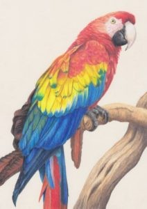 parrot-nature-in-art.jpg