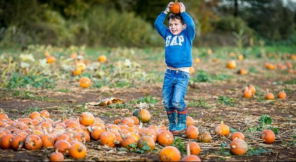 pumpkin-picking-boy-cotswold-farm-park