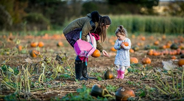 pumpkin-picking-cotswld-farm-park