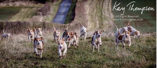 rac-beagles