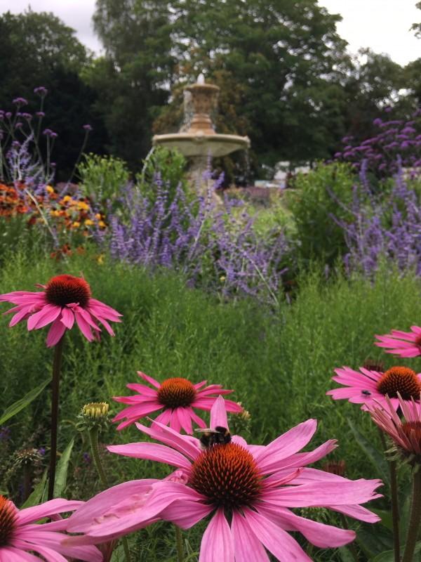 sandford-park-flowers.JPG