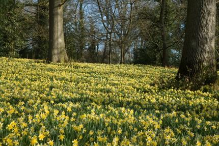 Daffodil Weekend & Spring Fayre 2018