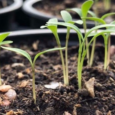 sow-it-grow-it-eat-it.jpg