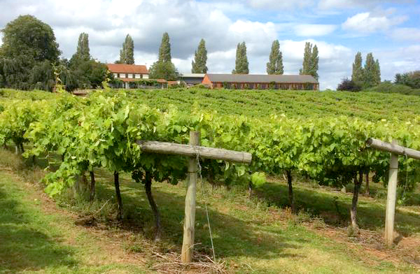 three choirs vineyard newent wine