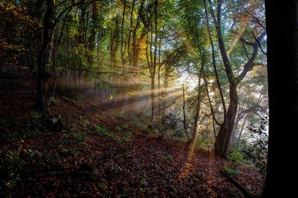 uley sun woods photo
