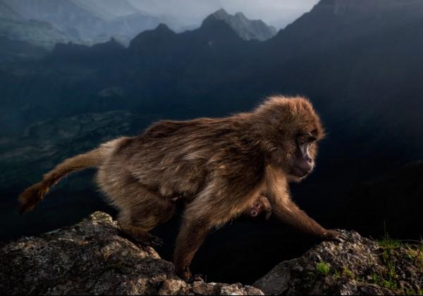 wildlife-photographer-of-the-year-nature-in-art.jpg