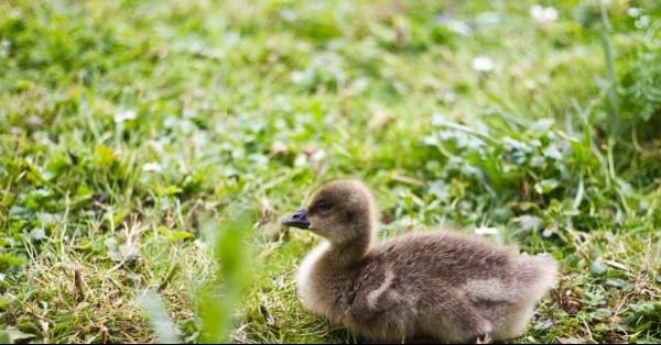 wildlife-photography-for-beginners-slimbridge.jpg