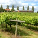 Three Choirs Vineyard - photo