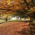 Autumn at Painswick Beacon