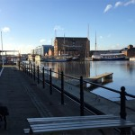 Dog at the docks