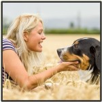 Social Paws - Pet behaviour support & dog training