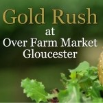 Gold Rush at Over Farm Market Gloucester - VIDEO