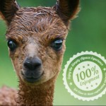 Simply Alpaca - The home of everything Alpaca