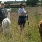 COMPETITION:  Win Alpaca Trekking for 2 (worth £50+vat)