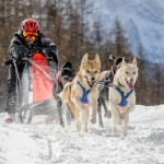 Help local dog sled racing ace to become World Champion!
