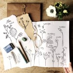 Botanical Drawing Workshop with Emma Mitchell: Cotswolds