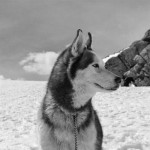 Film at the Wilson – White Fang (1991) Rated U & The Antarctic Adventurers