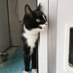 Barney - Gender : Male Age : 20 mths Breed : Dsh