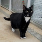 Pippie - Gender : Female Age : 5.5 yrs Breed : Dsh