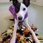 Jenna - Age: 13 Months - Gender: Female - Breed: Lurcher
