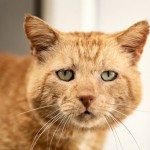 Archie - Gender : Male Age : 6yrs approx Breed : Dsh