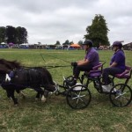 Review of Cotswold Show, Cirencester 2019 - in photos