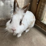 Pete - Age: 3 years - Gender: Male - Breed: Greyhound