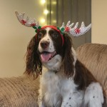 Ho-ho-howling great Christmas 'Paw'rade to raise funds for hospice