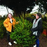 Charity eco Christmas trees - more than just a Christmas tree