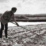 The Art of Market Gardening: Cotswolds
