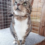 Jester - Gender : Male Age : 11-12 yrs Breed : Dsh