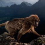 Exhibition: Wildlife Photographer of the Year