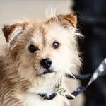 Barney - Age: 1 Years - Gender: Male - Breed: Terrier