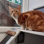 Tikka - Gender : Male Age : 7-8 yrs Breed : Dsh
