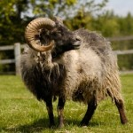COMPETITION - WIN Cotswold Farm Park tickets for 2 adults and 2 children