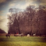 Hunting in Cirencester Park - Photo