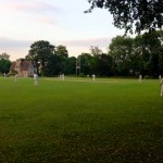 Cricket at Dusk - photo